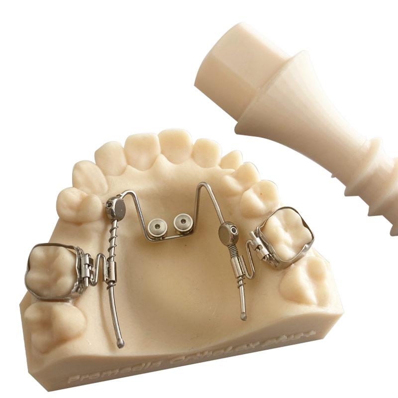 OrthoLox plus Typodont